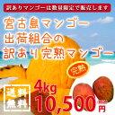宮古島の完熟マンゴーをできるだけ安く食べたい!そんな声にお応えして訳ありマンゴーをご用意しました。ご家庭、ギフト、お取寄せに。|宮古島マンゴー|送料無料|30%off【送料無料】【30%off】宮古島マンゴー出荷組合の訳あり完熟マンゴー 4kg|沖縄土産|お中元|ギフト[食べ物>フルーツ>マンゴー]
