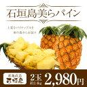 ハワイ種パイン|南国の太陽がおいしく育てた甘くておいしいパイナップル。石垣島からお届けし...
