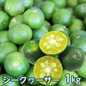 【送料無料】沖縄県産青切りシークヮーサー果実約1kg(約40個〜50個前後)