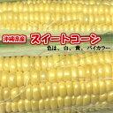 スイートコーン・2L・14本【発送11月〜5月】沖縄県産(沖...