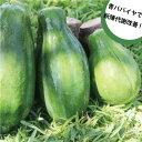 沖縄産青パパイヤ約20kg 【夏季はチルド便でお届けします。】青パパイヤは栄養価が高く健康維持に大切な酵素を豊富に含んでいます。【パパイア 野菜 国産 国内産 沖縄県産 お取り寄せ セット 料理 惣菜 おかず サラダ 材料 パパイヤ酵素】【たま青果】