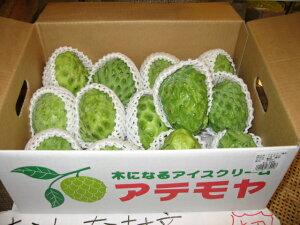 【発送11〜3月】フルーツなのにバニラアイスに似た甘さアテモヤ 1kg【05P13Dec15】