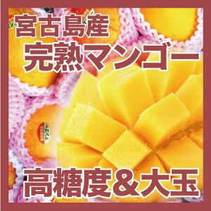 長く樹上に残ったため、平均糖度が17度以上とたいへん美味しくお買い得な完熟マンゴーです。【...