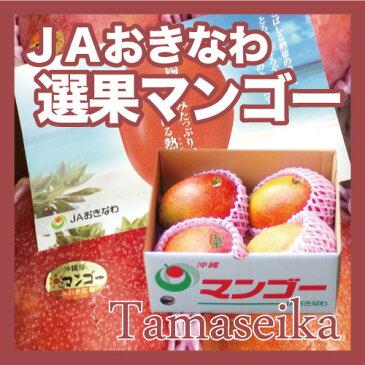 【送料無料】【JAおきなわ選果マンゴー】沖縄産完熟マンゴー約1.5kg前後JAおきなわの選果基準に適合しながら、贈答用などでは使用できないご家庭ランクのマンゴーです。【発送7月初〜8月中旬】【国産 果物 トロピカルフルーツ お取り寄せ】【たま青果】