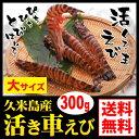 Kurumaebi_300g_icon