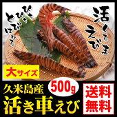 久米島産活車えび500g(約20尾〜27尾)
