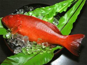 沖縄 鮮魚 さかな お土産 沖縄土産 おみやげミーバイ1Kg〜1.5kg【RCP】