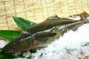 おきなわスギ(スギ)1.5〜2kg10P02Dec09