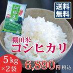 【楽ギフ_のし】【米10kg】新潟こしひかり棚田米コシヒカリ(5kg×2袋)おいしいお米送料無料10キロ