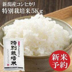 新潟産コシヒカリ特別栽培米5キロ
