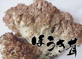 天然きのこほうき茸(ねずみたけ)300g
