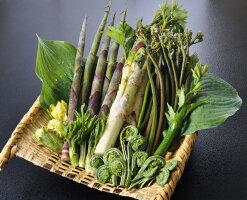 天然山菜天麩羅セット1kg