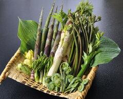 【天然山菜】山菜天ぷらセット500g★会津地方産 山菜 春の味覚 朝取り採れたて新鮮な山の幸を…