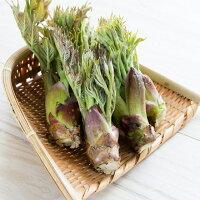 天然山菜タラの芽300g