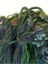 天然塩蔵山菜わらび