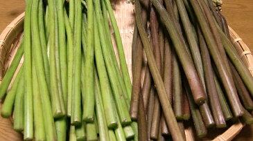 【天然 山菜】ワラビ(紫わらび・どじょう蕨)朝取り 500g会津地方産 春の味覚 山の幸 採りたて山菜を産地直送