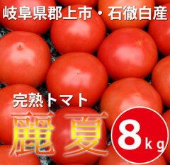 樹上で赤く熟してから収穫した、昔ながらのおいしいトマト岐阜県郡上市石徹白産 完熟トマト麗...