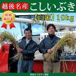 新潟県産特別栽培米こしいぶき10kg(白米)【新潟県産コシイブキ】【もりばやし農園特別栽培米コシイブキ】