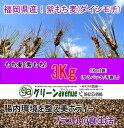 もち麦 もち麦ごはん 紫もち麦 国産 3Kg 送料無料 大麦