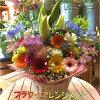 おまかせフラワーアレンジメントMサイズ今の季節で1番輝いている生花でお作り致します(ユリ入り)ご希望のメッセージをカードに作成フラワーギフト発表会記念日楽ギフ_包装楽ギフ_メッセ入力