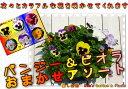 癒し空間 One's Garden作成♪空中に広がる寄せ植えガーデニングを楽しむ♪壁掛けタイプ♪プレ...