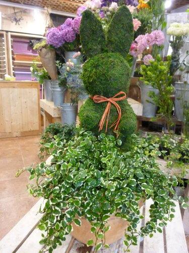 斑入りフィカスプミラを植え付けたアニマルトピアリーモス♪動物シリーズ♪ウサギ(うさぎ)さん♪...
