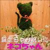 トピアリーモス♪アニマルシリーズ♪猫(ネコ)さん♪【陶器鉢・受け皿付き】場所取らずでちょこっと置くだけ♪プレゼントや景品にも♪