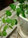 【楽ギフ_包装】【楽ギフ_メッセ入力】スタイリッシュな観葉植物♪4色の鉢から選べる♪ハートジュエリー(ディスキディア)♪ハートの形をした葉っぱが可愛い♪場所取らずでちょこっと置くだけ♪誕生日やお祝いにも♪モダン風アジアンテイスト♪