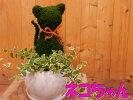 アニマルトピアリーモス♪動物シリーズ♪猫(ネコ)さんニャンニャン♪Sサイズタイプ2斑入りフィカスプミラを植え付けています♪陶器鉢植え・受け皿付き場所取らずでちょこっと置くだけ♪誕生日やお祝い・プレゼントや景品にも♪