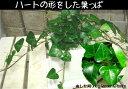 玄関の下駄箱に飾ればちょっと素敵♪これからミニ観葉植物を楽しむ方へ【1000円均一セール】テ...