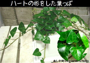 玄関の下駄箱に飾ればちょっと素敵♪これからミニ観葉植物を楽しむ方へ♪テーブルサイズ【陶器...