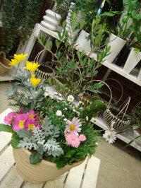 【送料無料】人気のオリーブと季節の寄せ植え♪コンテナガーデン♪