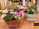 新商品セール価格♪お花畑の寄せ植えシリーズ♪季節の旬のお花たちを使用しておまかせの寄せ植えをお届け♪M-サイズプラスチック製で軽量化鉢カラーをお選びください♪おまかせピック付き♪【楽ギフ_包装】【楽ギフ_メッセ入力】【送料無料】ギフト特集