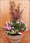 ジャノメエリカをメインに春のおまかせ寄せ植え♪プラスチック製で軽量化♪おまかせピック付き♪【楽ギフ_包装】【楽ギフ_メッセ入力】【送料無料】