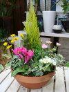 季節の寄せ植え♪初めてのコンテナガーデン♪おまかせピック付き♪S-サイズ
