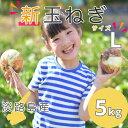 【新玉ねぎ】5kg Lサイズ   送料無料(北海道・沖縄を除
