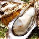 ★落札でポイント2倍★ぷりぷりの特大!広島県産冷凍牡蠣(かき)ハーフシェル特大サイズ10個入...