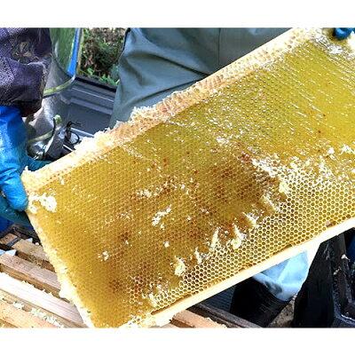 5%還元枝次養蜂園おおいた百花はちみつ300g【味覚の秋フェアクーポン】