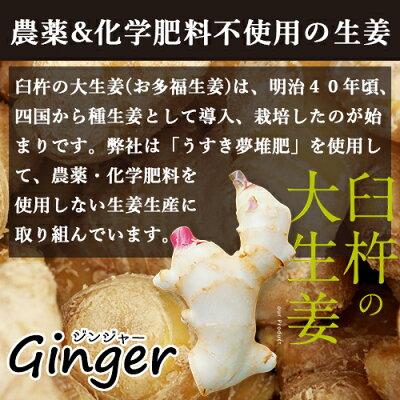 臼杵の大生姜