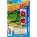 タキイ 種苗 キャベツ 種子 「 春波 」 小袋 ペレット 150 粒 規格 種 野菜の種 寒蘭 種