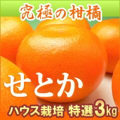 ハウスせとか2-3L(3kg)愛媛産 瀬戸香 みかん 柑橘 送料無料