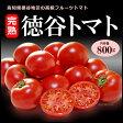 徳谷トマト(約800g)高知産 塩トマト フルーツトマト とまと 高糖度 送料無料