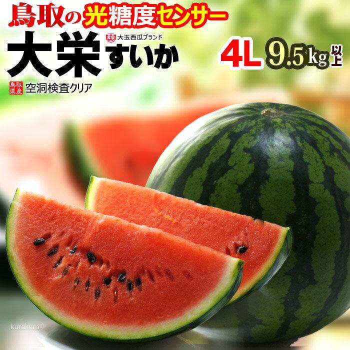 鳥取県産『大栄スイカ』