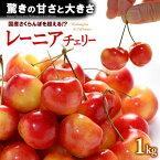 レーニアチェリー(1kg)アメリカワシントン州産 レイニアチェリー サクランボ 食品 フルーツ 果物 さくらんぼ アメリカンチェリー 送料無料