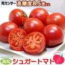 シュガートマト(約700g)高知産 フルーツトマト とまと 日高村 JAコスモス 糖度8.5度以上 食品 野菜 きのこ トマト 送料無料