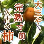 完熟寸前久古の大玉富有柿