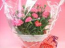 【母の日ギフト】桔梗信玄餅6個袋入りとカーネーションの鉢のセット
