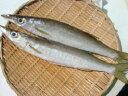 秋です!本かます(2本) 旬の生のカマスを豊洲市場から直送!(お魚のプロが下処理します) 塩焼き用(エラ腹抜き)・一夜干し用(背開き)・両方のセット…3種類からお選び下さい!1本約250gの丸々と太った美味しいカマスです。ご家庭で本物の味を満喫されて下さい!