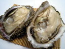 舞鶴産岩牡蠣