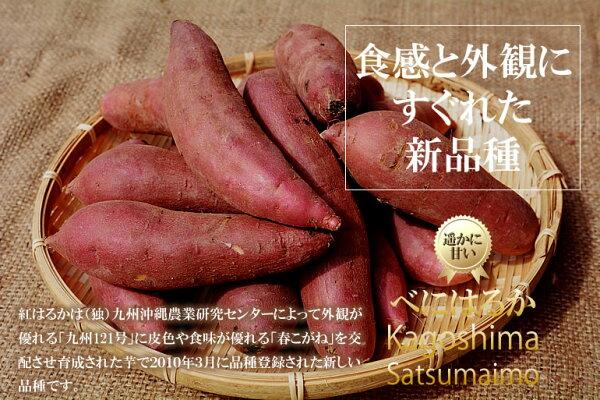 【送料無料】べにはるか2kg紅はるか鹿児島県産お取り寄せ特産品安納芋より美味しいと評判のさつまいも!しっとりした食感はまるでスイーツ☆